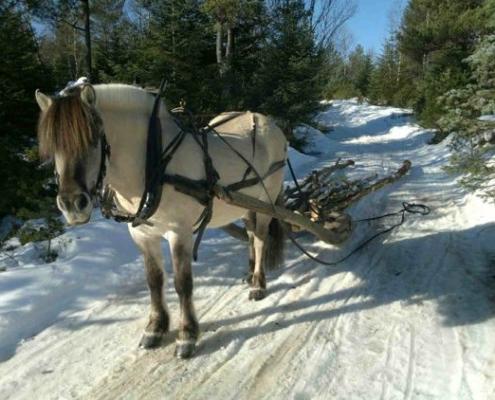Skogsdrift med hest - Kolbjørntunet