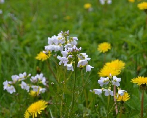 Blomstereng - Kolbjørntunet