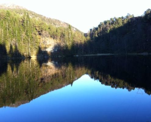 Skog og stille vatn - Kolbjørntunet