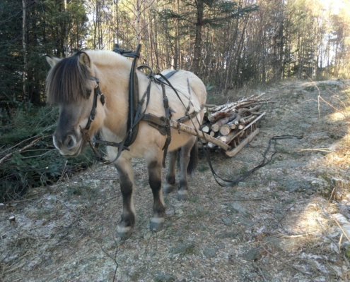 Hest med ved på sleden - Kolbjørntunet